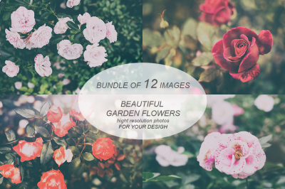 Garden flowers, photo pack