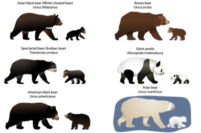 Bears and bear-cubs