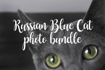 Russian Blue Cat Photo bundle