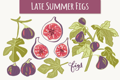 Late Summer Figs - Clip Art & Vectors