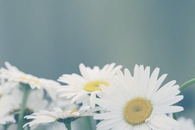 Chamomile flower bouquet. Vintage retro style.