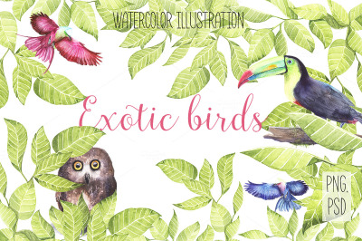 Watercolor exotic birds