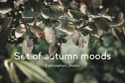 Photo set of autumn moods