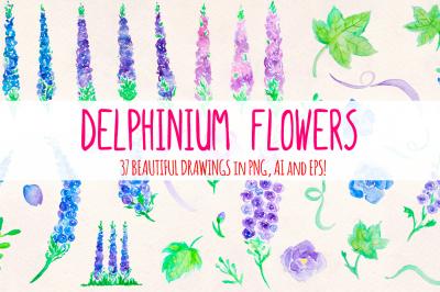 Delphinum