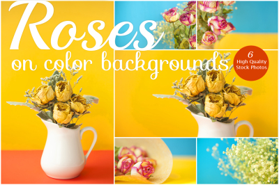 Roses on color backgrounds