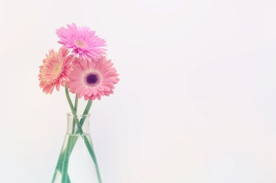 Gerbera flower bouquet on light background.