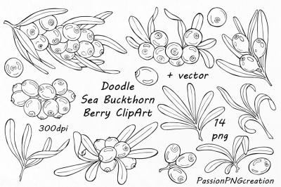 Doodle sea buckthorn berry clipart, Digital floral clip art, Branches