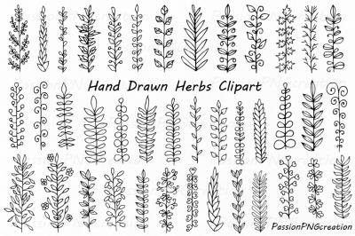 Hand Drawn Herbs Clipart, Leaves clip art, Herbs Silhouette