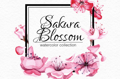 Sakura blossom collection