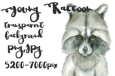 Raccoon watercolor kid