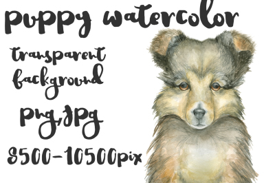 Puppy watercolor