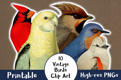 10 Vintage Birds Clipart, Antique Bird Clipart, Vintage Animal Clipart, Cardinal Clipart, Birds PNG