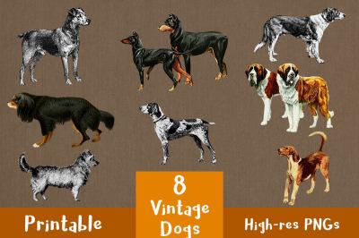 8 Vintage Dogs Clipart, Pet Clipart, Antique Dog Clipart, Animal Clipart, Pet Clipart, Doberman Clipart, Spaniel, Terrier