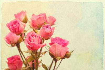 Roses bouquet. Vintage retro style. Paper textured.