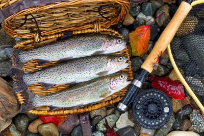 Trout in creel with gear on rocks