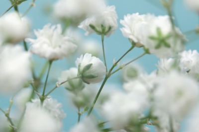 White flower on blue background. Soft focus.