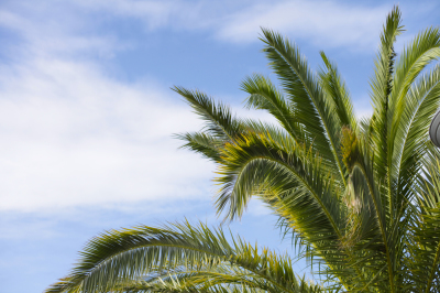 Search Results For Palm