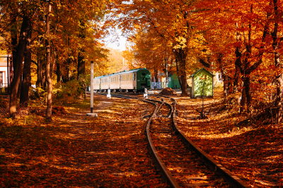 Train on autumn forest