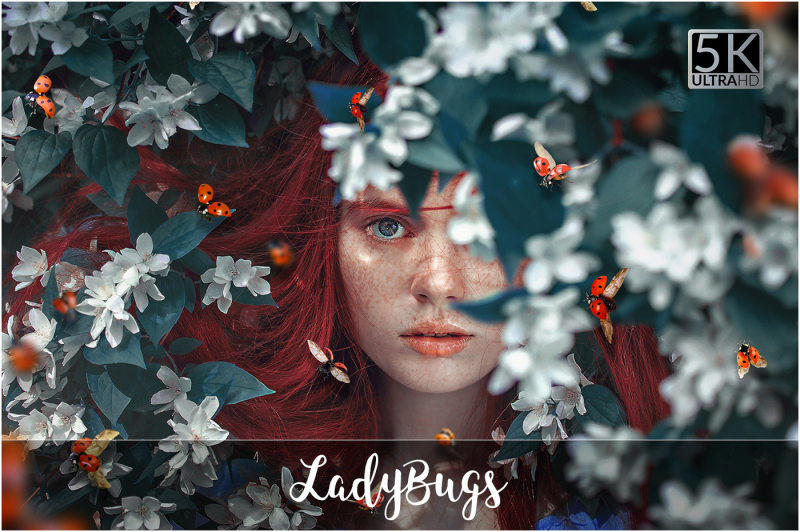 5k-ladybugs-overlays