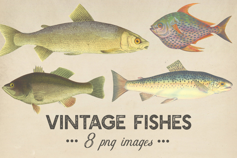 Vintage Fishes Clipart