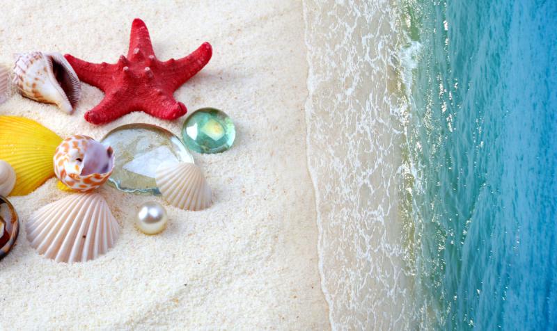 sea-shells-on-sand-beach