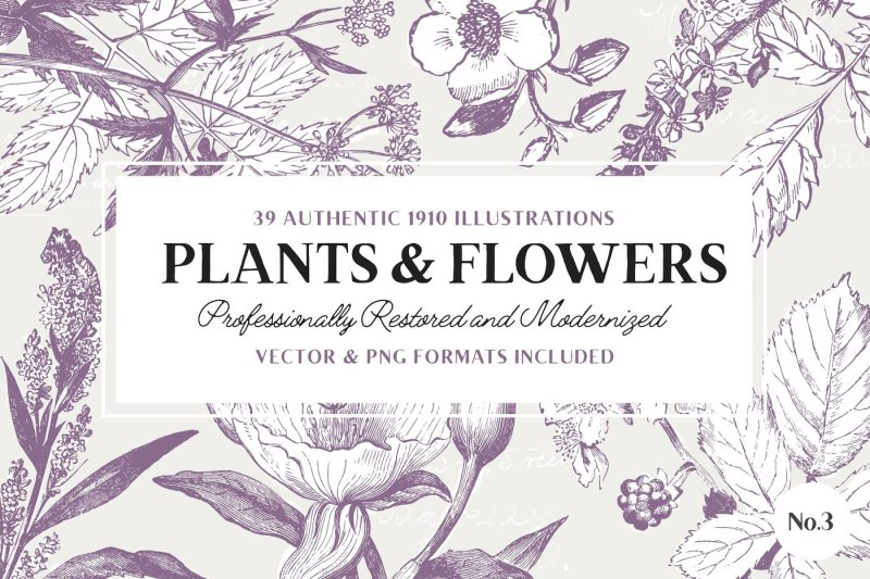 39-plant-and-flower-illustrations-no-3