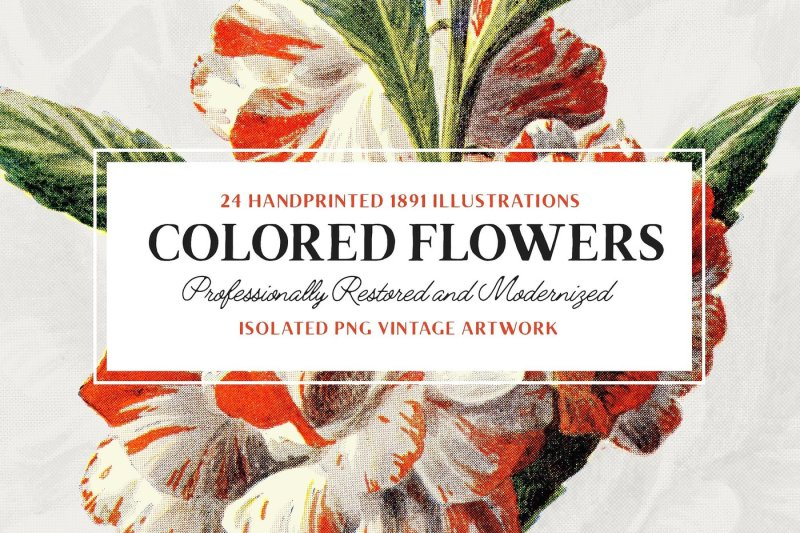 24-colored-flower-illustrations