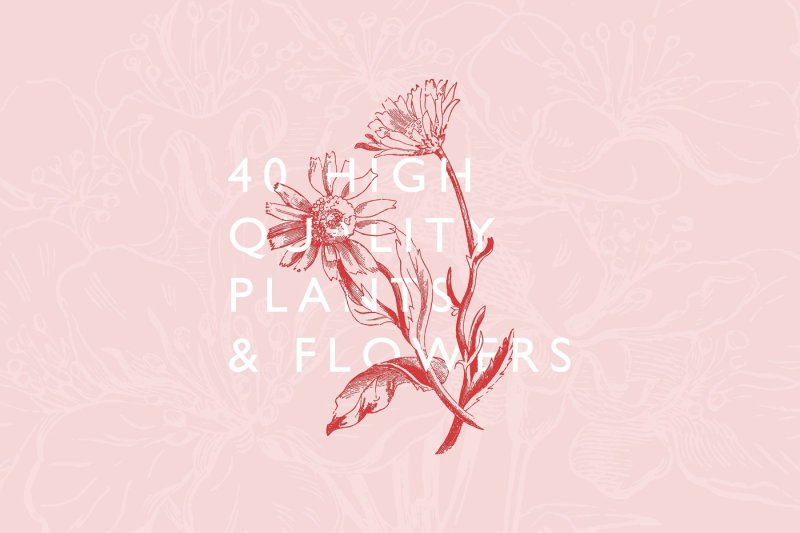 40-plant-and-flower-illustrations-no-5