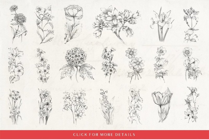 20-sketched-flower-illustrations