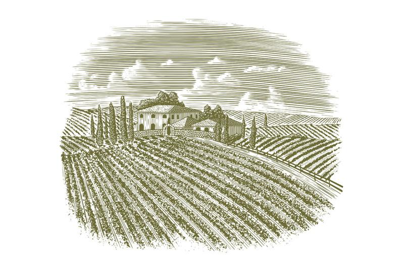 woodcut-vintage-italian-vineyard
