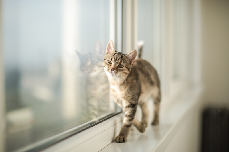 little-kitten-playing-at-the-window