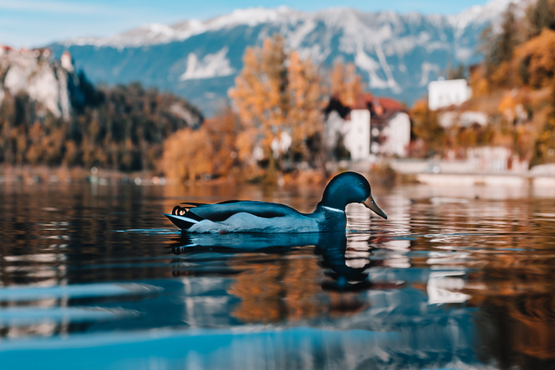 photo-set-from-35-photos-lake-bled-in-the-alpine-mountains-in-slovenia