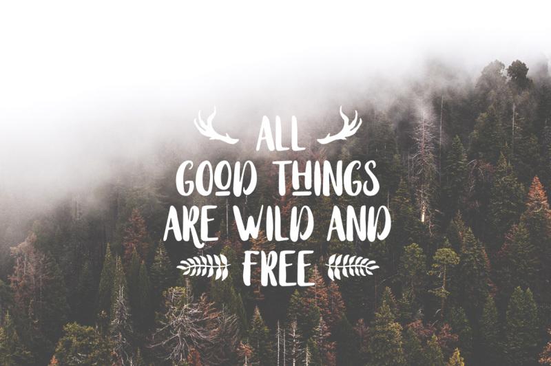 stay-wildy