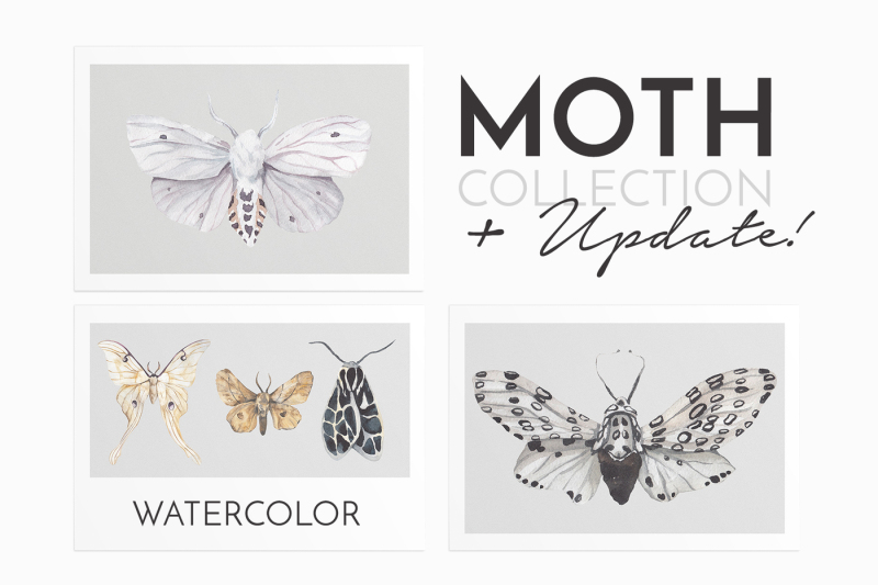 moth-17-butterflies-watercolor-collection