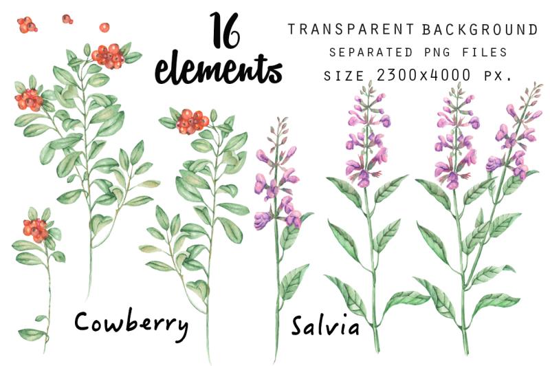blueberry-cowberry-salvia