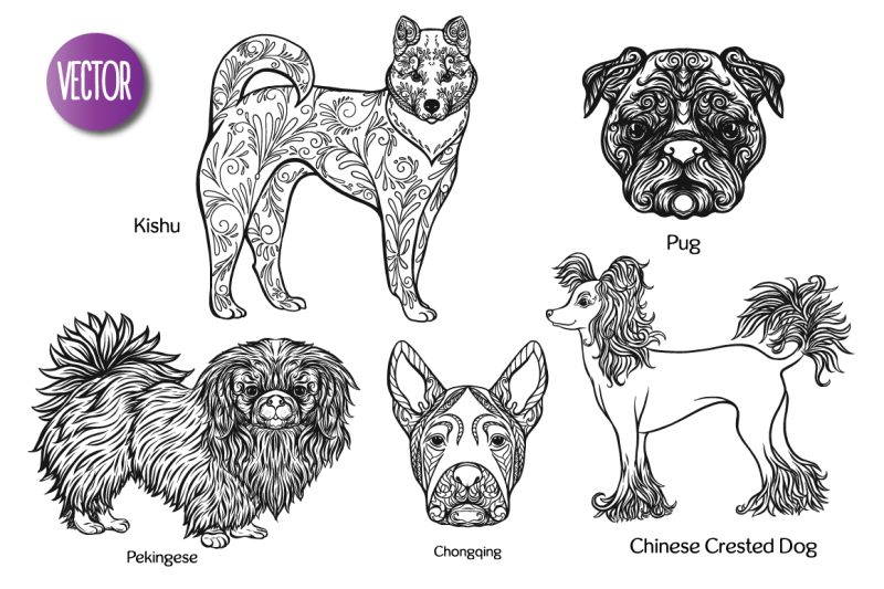 28-dogs-of-different-breeds