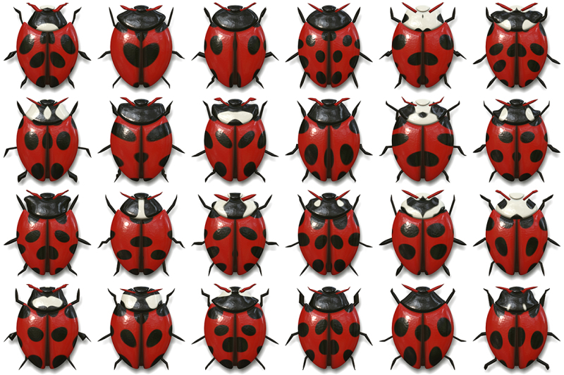 10-beetle-collection-background-textures