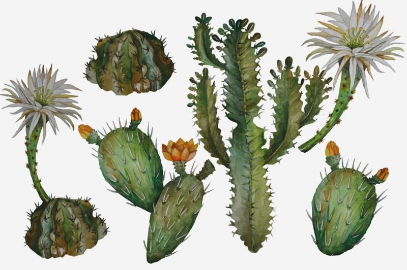 succulents-and-cacti-clip-art-set