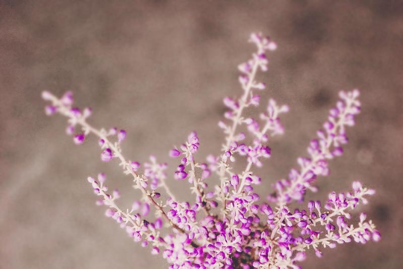 monkey-grass-blooms