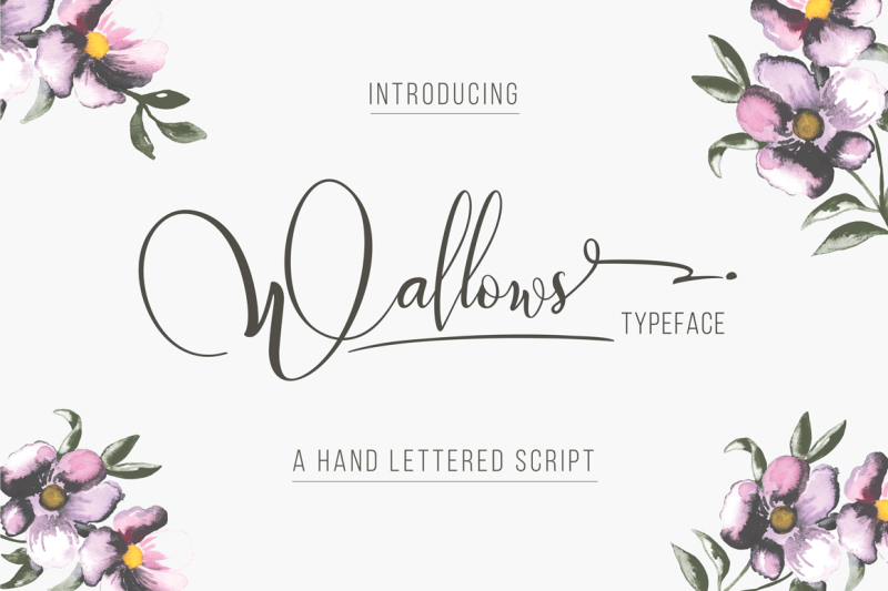 wallows-typeface