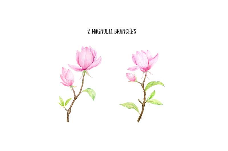 watercolor-pink-magnolia-illustration