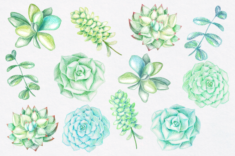 succulents-drawn-by-color-pencils