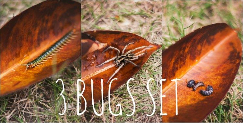 3-bugs-set