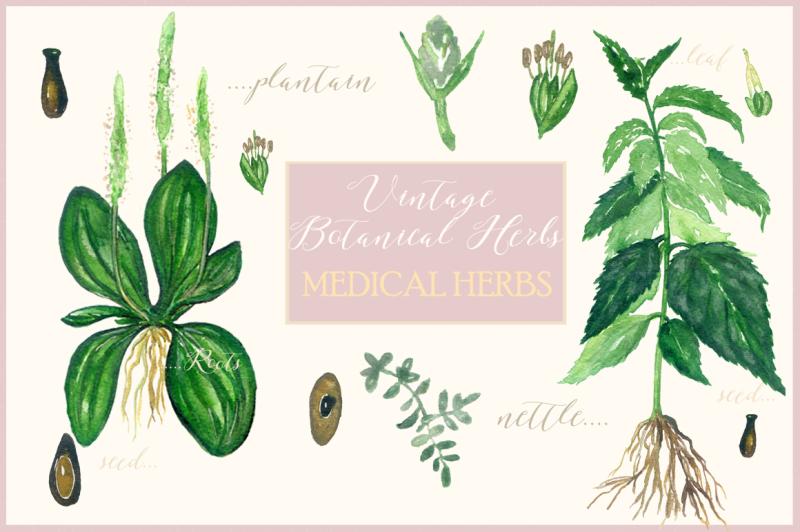 vintage-botanical-herbs