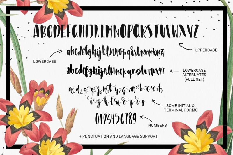 asparagus-whimsical-brush-font