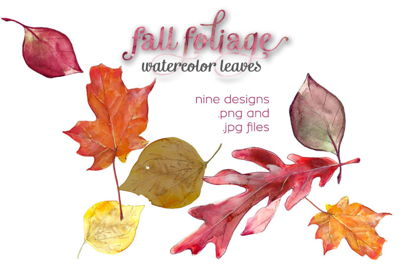 fall-foliage-watercolor-illustrations
