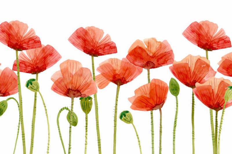 digital-clipart-watercolor-poppies-flower-clipart
