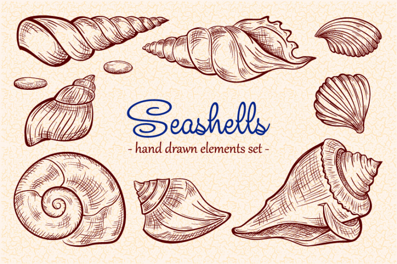 seashells-design-elements-set