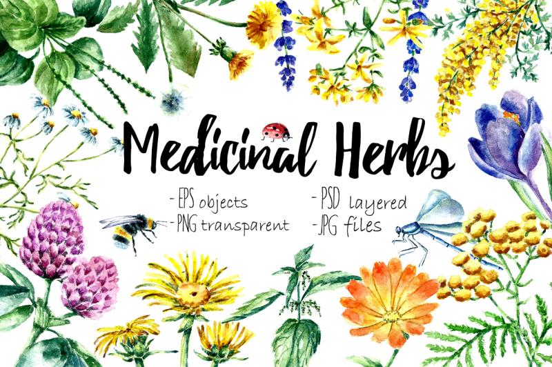 watercolor-medicinal-herbs