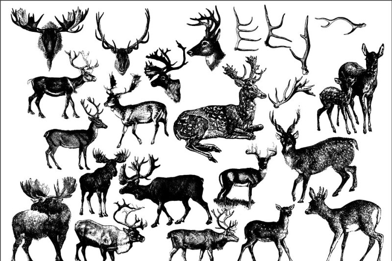 31-vintage-deer-clipart-and-brushes